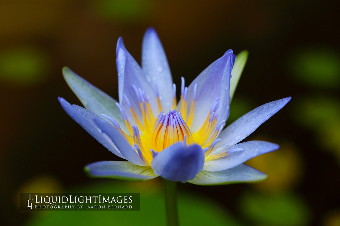 lily2016_006