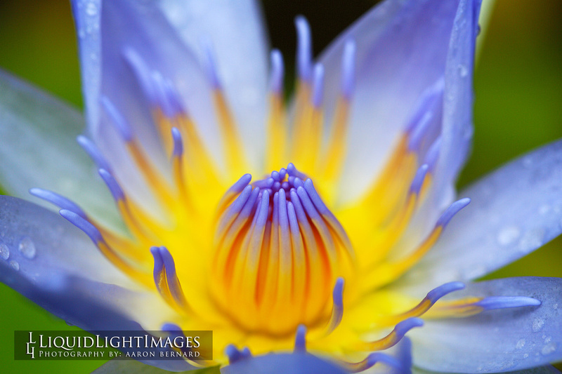 lily2016_003