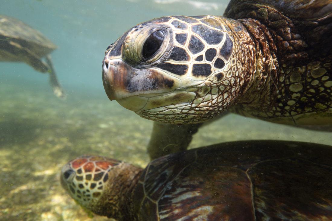 turtles_086