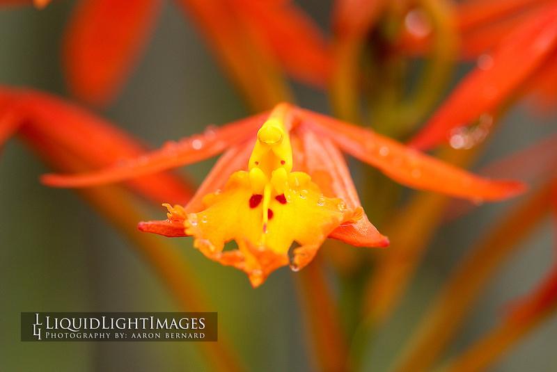 orchids2016_006