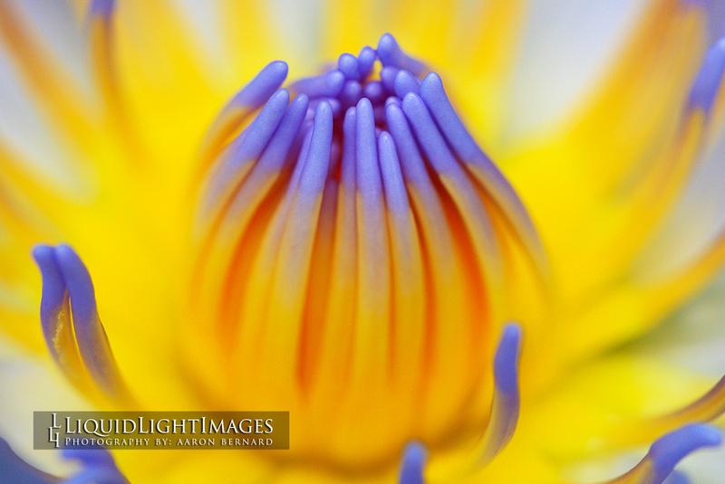 lily2016_003B