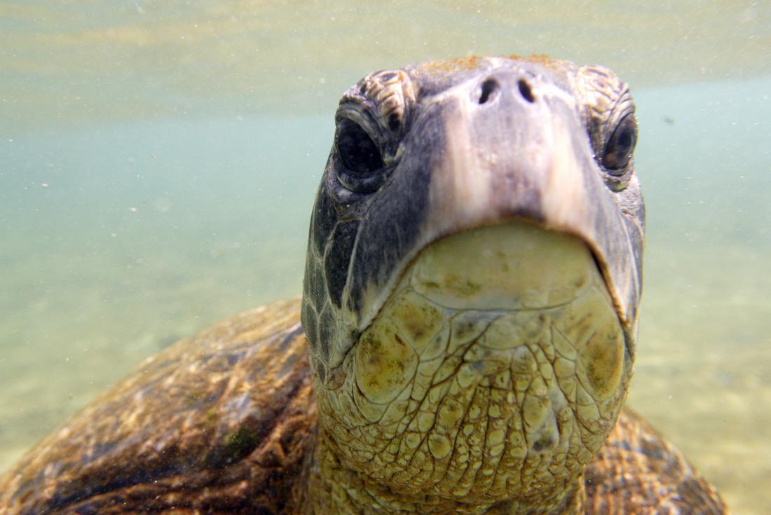 turtle2008_015